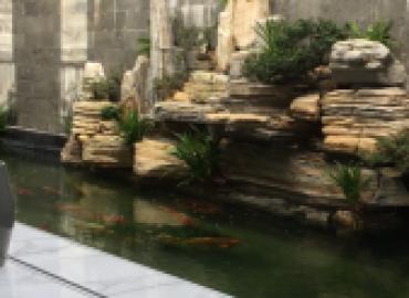Cung cấp đá cảnh làm non bộ,thác nước