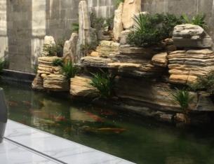 Thi công hồ Koi 6